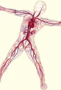 Реабилитация сердца